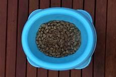 trockenfutter hund test hundefutter test trockenfutter vs nassfutter