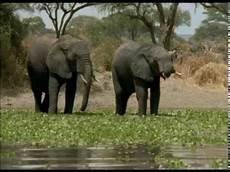ein paradies f 252 r tiere afrikas wildes herz the great - Paradies Für Tiere