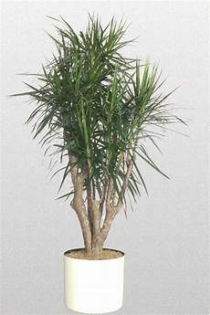 68 Best How To Identify A Houseplant Images On