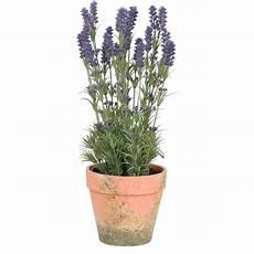 clayre eef 4pl0025 dekoration lavendel im topf