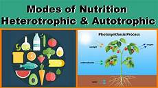 which nutrient is changed by bacteria into different forms nutrition modes of nutrition heterotrophic autotrophic biology science letstute