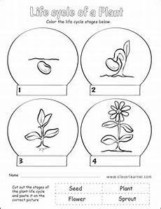 worksheets on plants cycle 13606 plant cycle grade worksheets plant cycle cycles plant cycles