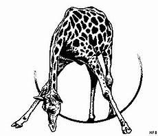 Gratis Malvorlagen Giraffe Trinkende Giraffe Ausmalbild Malvorlage Tiere