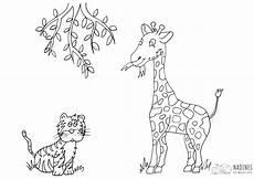 Malvorlagen Giraffe Um Giraffe Mit Tiger Nadines Ausmalbilder