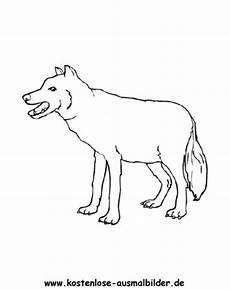 Malvorlage Wolf Einfach Kostenlose Ausmalbilder Ausmalbild Wolf 1
