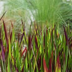 gräser im steingarten ziergr 228 ser f 252 r einen sch 246 nen garten dehner