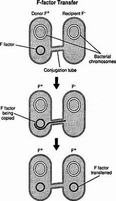 bacterial recombinations