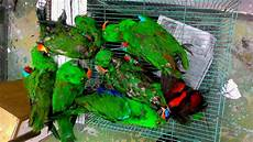 Gambar Penyelundupan Burung Botol Plastik Terulang
