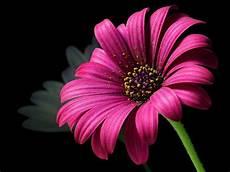 Flower Wallpaper Photo by Flower Wallpaper 183 Pexels 183 Free Stock Photos