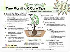 how to plant your tree arbor day hawaii