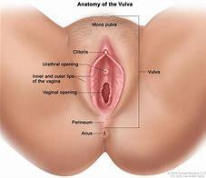 Erotic vaginal examinations for a class