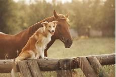 Malvorlage Pferd Und Hund Hund Und Pferd Aneinander Gew 246 Hnen So Geht S