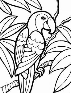 bird feather coloring pages at getcolorings free