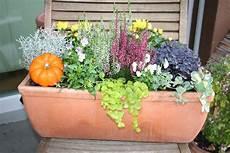 Balkonkasten Herbst Winter - der winter kommt bestimmt herbstblumenkasten bepflanzen