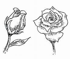 Ausmalbilder Blumen Tulpen Tulpen Bilder Zum Ausmalen
