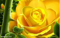 flower wallpaper come yellow flowers flower hd wallpapers images
