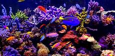 fond d écran pc 4k aquarium 4k live wallpaper appstore for