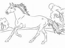 Koleksi Gambar Binatang Kuda
