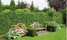 pflanzen für hecke anleitung pflanztipps hecke pflanzen pflanzen s 228 en