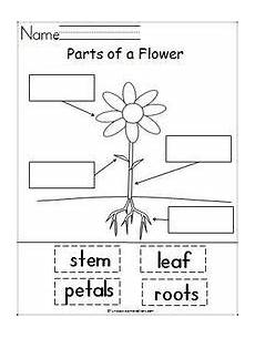 science plants ks1 worksheets 13580 pin on worksheets