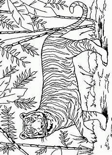 tiger coloring pages malvorlagen malvorlagen tiere