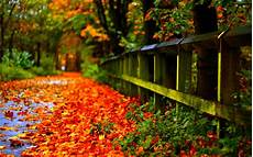 Autumn Leaves Wallpaper wallpapers autumn leaves wallpaper cave