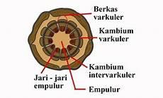 Biopasat Smpn 1 Paseh Anatomi Batang