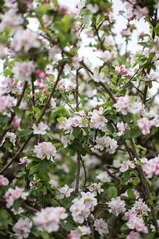 best things to see in apple trees in blossom