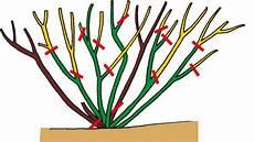 schneiden frühling gartencenter streb gr 252 n erleben richtig schneiden