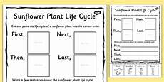 plant life cycle worksheet teacher made