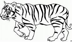 tiger malvorlagen zum ausdrucken kostenlos ausmalbild tiger of tiger zum ausmalen sch 246 n tiger