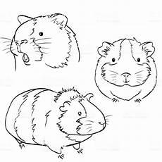 Meerschweinchen Ausmalbilder Malvorlagen Malvorlage Meerschweinchen Ausmalbilder Fur Euch
