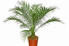 Pflanzen Die Die Luft Reinigen Luftreinigende Pflanzen Top 10 F 252 R Weniger Schadstoffe