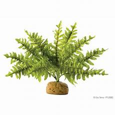 farn pflege draußen exo terra terrarien pflanze boston farn