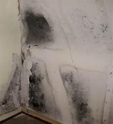 styropor dämmung schimmel schimmel in der wohnung entfernen und vermeiden schimmel