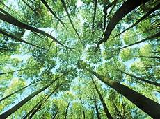 Paling Populer 21 Foto Pemandangan Hutan Pinus Arka Gambar