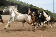 welche pferderasse passt zu mir welches pferd passt zu mir seite 12