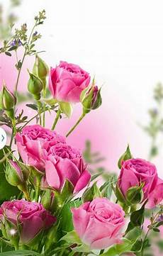 Lock Screen Flower Teddy Wallpaper