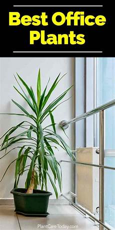 best indoor plants for the office