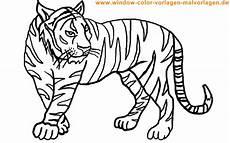 malvorlagen tiger kostenlos ausdrucken malvorlagen tiger malvorlagen