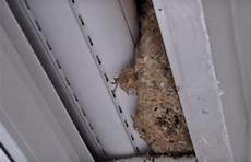 Was Kann Ich Machen Damit Die Wespen Nicht In Meine