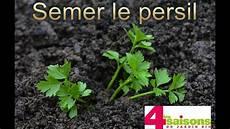 semer le persil semer le persil les 4 saisons du jardin bio