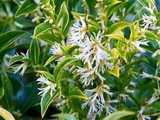 Haie Basse De 10 Arbustes 224 Feuillage Persistant