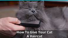 how to give your cat a haircut carefully