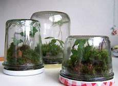 kleines terrarium terrarium terrarium terrarium