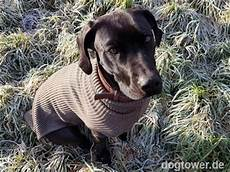 hundeshop hundekleidung zufriedene kunden