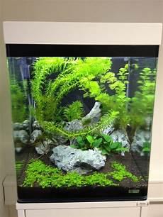 60 liter becken mein nano cube aquarienvorstellung der wirbellotse