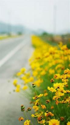 yellow flower wallpaper iphone yellow flowers iphone wallpapers hd gt yodobi