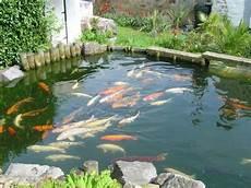 bassin a carpe koi conseils de pro pour entretenir votre bassin koi