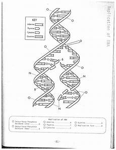 dna coloring transcription translation
